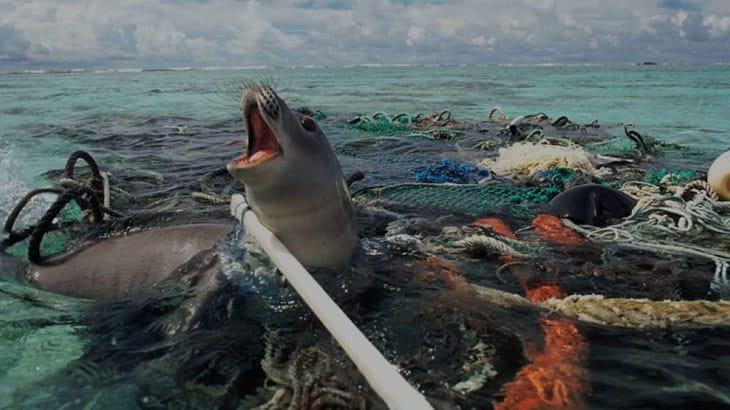 Seal stuck in plastic pollution in the ocean