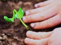 DROP THE GLOVES: Get your hands dirty and connect to your garden