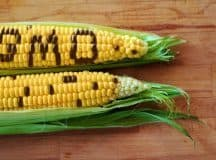 GENETICALLY MODIFIED FOODS: A case of mass deception