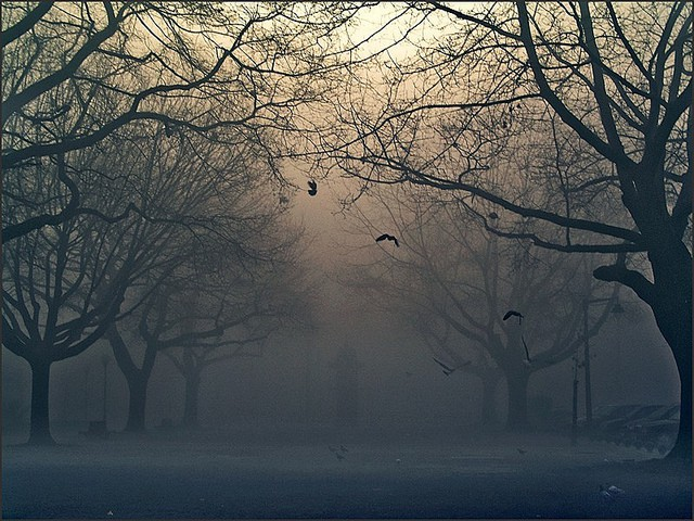 LONELY IN THE FOG: Anahita Ayasoufi's Response To Hermann