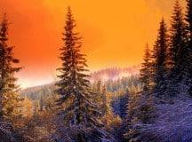 POEMS BY WILLIAM WARD: Snow on Pine, Beaver Pond, Morning Meditation at the Desert Botanical Garden