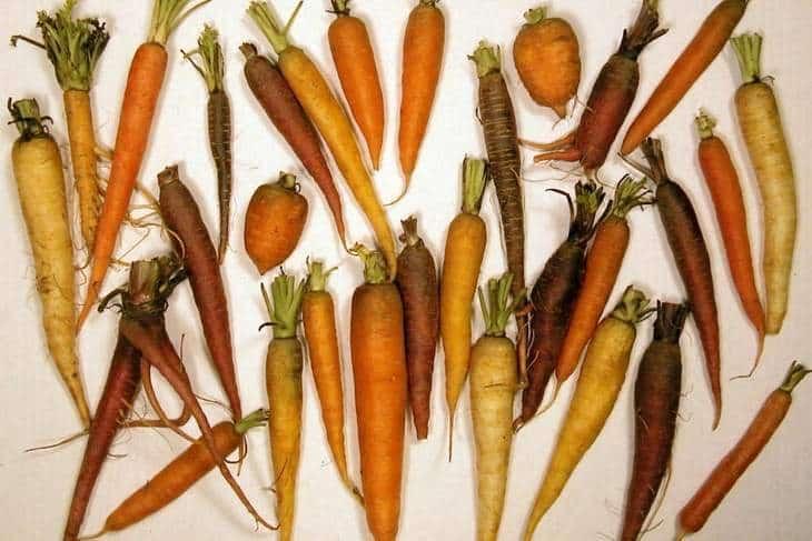 Group of carrots - Carrot/daikon drink recipe