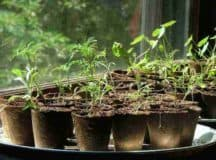 GUIDE TO SEED STARTING: It's already time to grow delicious vegetables!