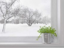 STAY GREEN: Growing indoor herb gardens