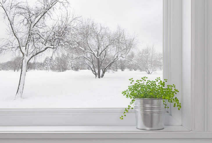 green plant in winter window - growing herb gardens over winter