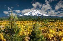 Mount Shasta - Transformative trip to Mount Shasta