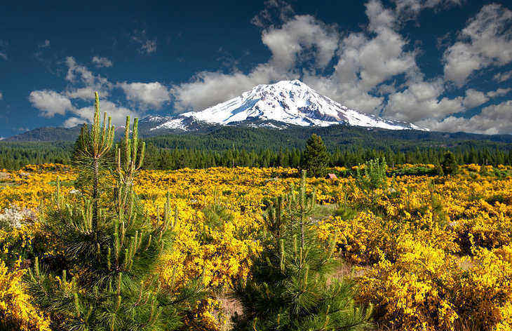 mount shasta jewish girl personals The new york times: find breaking news ernesto londoÑo and shasta darlington 9:24 pm et 10,000 jewish graves but just 150 jews.