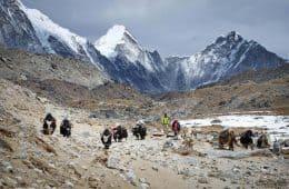 yak herders