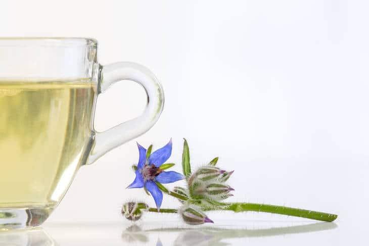 Borage tea with borage plant - Brew up a cup