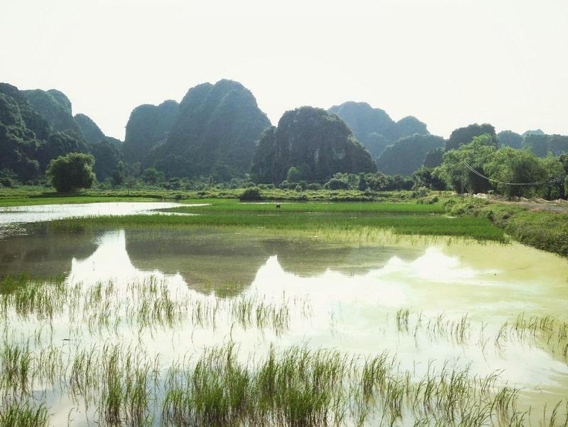 Landscape scene of limestone karsts reflected in ponds surrounding rice paddies