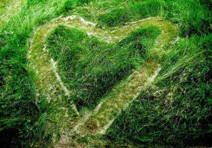 Heart drawn in grass - Poems and illustrations by Leah Pearlman