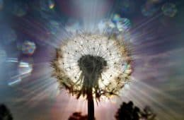 Illuminated dandelion representing wisdom - Setting our thoughts free