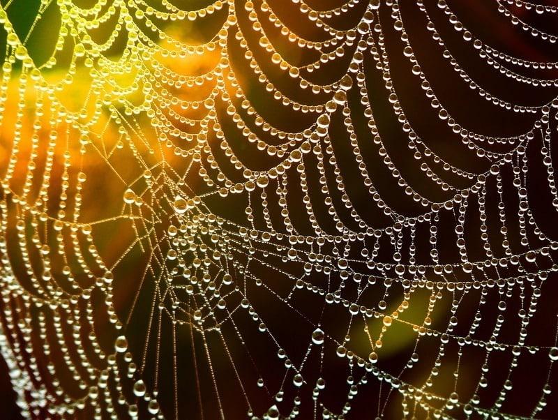 Spiderweb in the sun