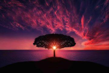 Tree landscape - future possible
