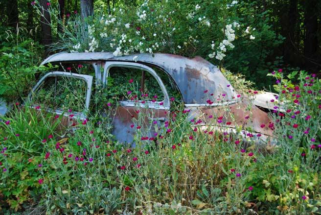 car garden - permaculture