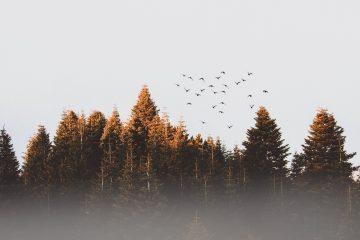 flock birds practicing present