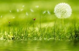 meadows bright poems
