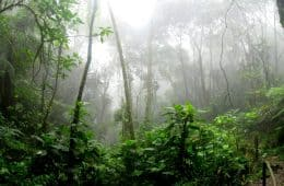 rainforest foggy time to grow