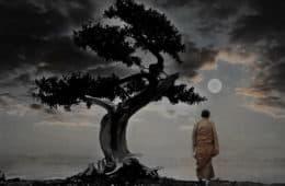 monk walking meditation under tree
