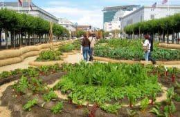 Victory Garden in San Francisco - Slow Food Nation