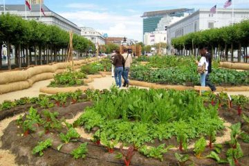 Victory Garden in San Francisco - Slow Food Nation