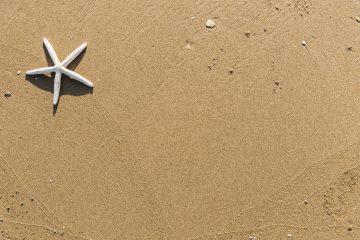 brown sand starfish spider
