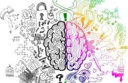 Left / right brain hemispheres