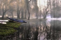 nature-cues-peaceful-fog-relationships