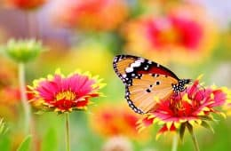 Butterfly - Where Beauty Lies