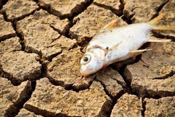 fish - extinction