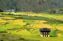 Rice fields - Bhutan