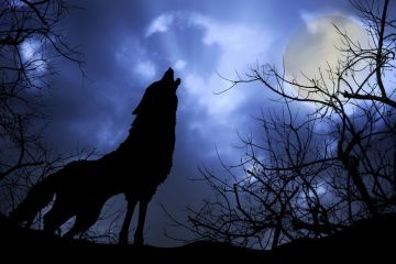Wolf Howling - Wake Up World