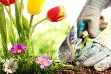 gardening - take time out