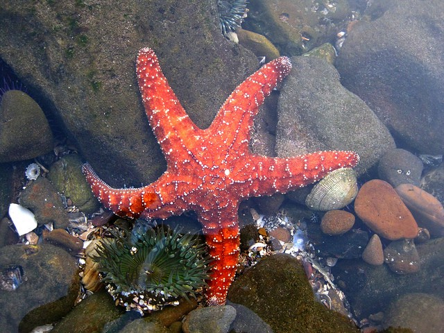 POEMS BY K.D. AEREY: Tidepooling, Perceptions