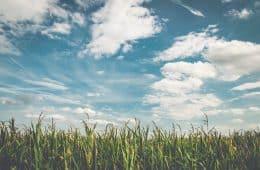field - belo horizonte