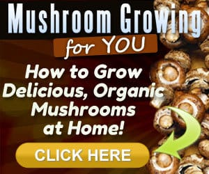 Growing Mushrooms guide
