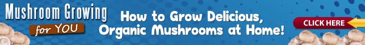 Mushroom growing guide