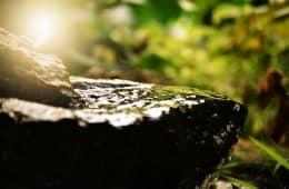 nature how to raise consciousness