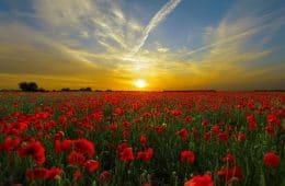 sunset field love revolution