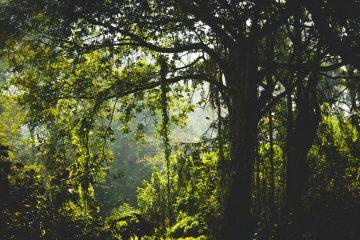 nature - wild life