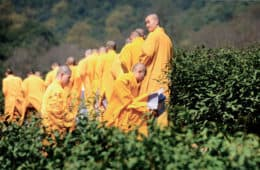 tea-zen-China Image monks in tea plantation