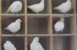 compartmentalized-pigeons-holes