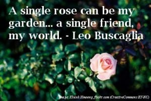 Single pink rose - Sentimental captions