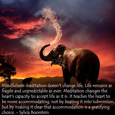 Elephant - mindfulness meditation