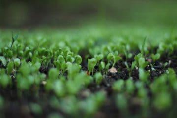 plants - organic standards