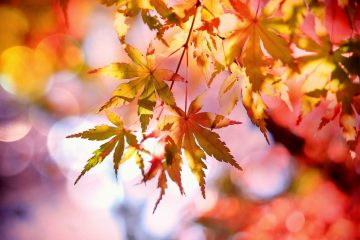 autumn - deep love quotes