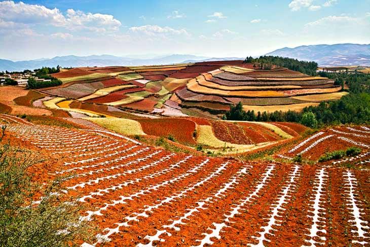 Farms, gardens and soil