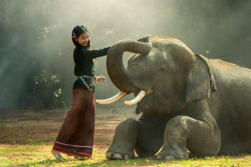 girl elephant - metta meditation