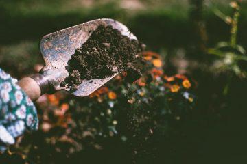 soil - burying non vegan