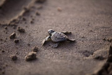 sea turtle - transformation